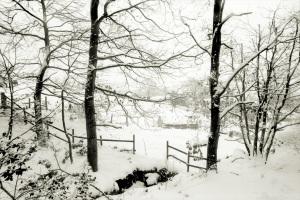 Ortho snow scene