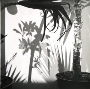 1439 plant shadows