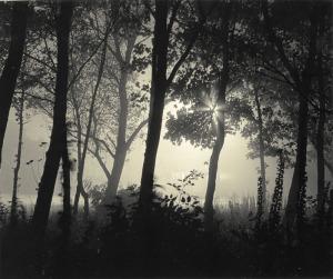 night mist